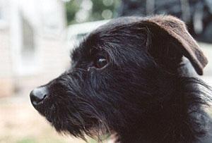 Canine Ibd Natural Treatment